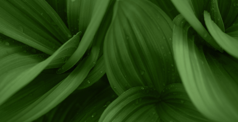 macrovita φυσικά καλλυντικά